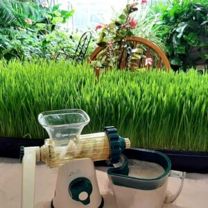 How to Grow your Own Wheat Grass and Barley Grass for Juicing|Home step by step